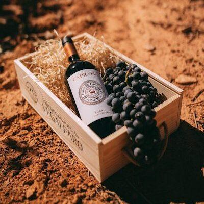Koop uw biologische wijn online bij biowijn.shop.
